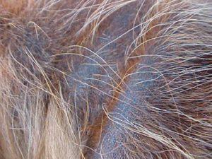 Болезни и лечение Чау-Чау Фото Чау-Чау | Чаушёнок | www.Чау-Чау-Спб.рф
