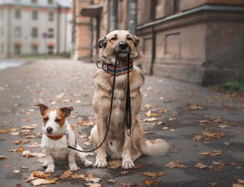 Популярные породы собак которых предпочитают заводить в городе